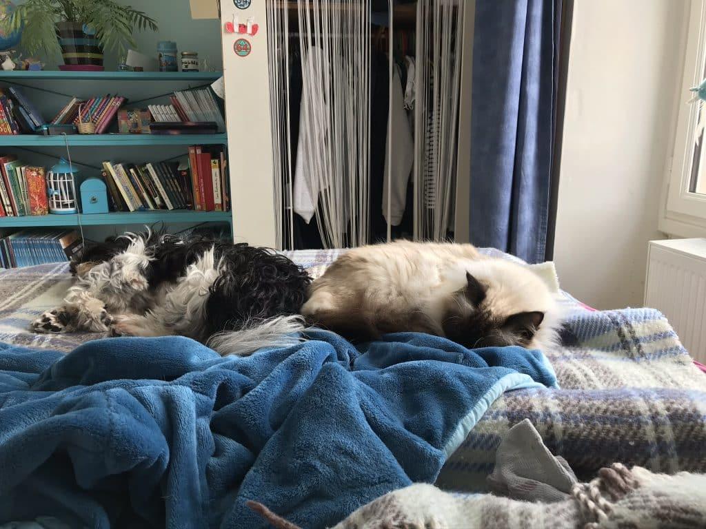 le chat et le chien ont une place équivalente à celle des être humains.